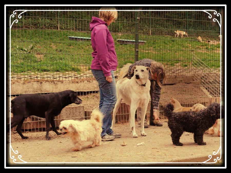 Tierschutz Eifel
